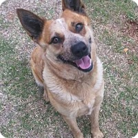 Adopt A Pet :: Sadie - Elgin, OK