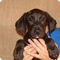 Adopt A Pet :: Yukon - Oviedo, FL