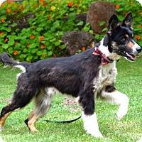 Adopt A Pet :: Ronan - Penngrove, CA