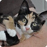 Adopt A Pet :: Raisinette - Gaithersburg, MD