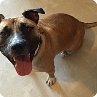 Adopt A Pet :: Buddy - Northville, MI