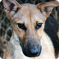 Adopt A Pet :: PEANUT  VON PENIG - Los Angeles, CA