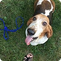 Adopt A Pet :: Lola (Sept 2016) - Cincinnati, OH