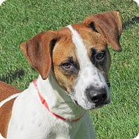 Adopt A Pet :: Rudy - Woodstock, IL