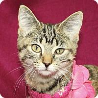Adopt A Pet :: Luna - Jackson, MI