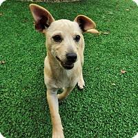 Adopt A Pet :: Sanchez - Dublin, CA