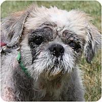 Adopt A Pet :: Andrea - Huntley, IL