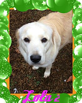 Golden Retriever/Great Pyrenees Mix Dog for adoption in Georgetown, Kentucky - Lola