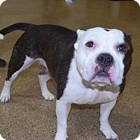 Adopt A Pet :: Nikki - Valparaiso, IN
