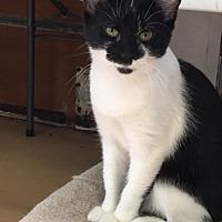 Adopt A Pet :: Vicki - Alpharetta, GA