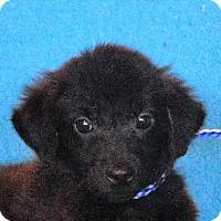 Adopt A Pet :: **NARRID** - Mukwonago, WI