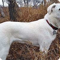 Adopt A Pet :: Duke - Kyle, TX