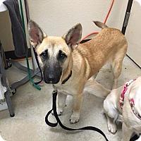 Adopt A Pet :: Ella (Fiona) - New Braunfels, TX