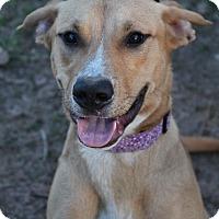 Adopt A Pet :: Missy - McDonough, GA