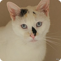 Adopt A Pet :: Hannah - East Hartford, CT