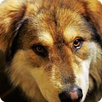Adopt A Pet :: Griz - Vancouver, WA