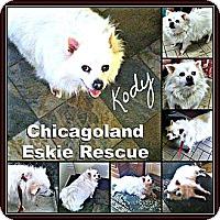 Adopt A Pet :: Kody - Elmhurst, IL