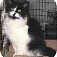 Adopt A Pet :: Dominick - Davis, CA