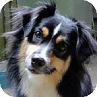 Adopt A Pet :: Zax - Savannah, GA