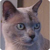 Adopt A Pet :: George - Davis, CA