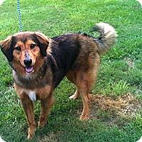 Adopt A Pet :: Doug - Courtesy Listing - Cheshire, CT