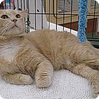 Adopt A Pet :: Shiloh - Vero Beach, FL