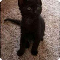 Adopt A Pet :: Jet - Davis, CA