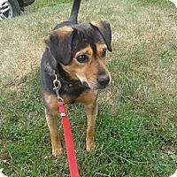 Adopt A Pet :: Prince - Covington, KY