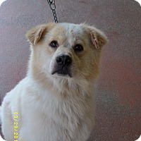 Adopt A Pet :: Fredrick-Prison Obediance Trai - Hazard, KY