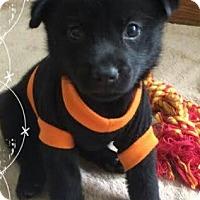 Adopt A Pet :: Kelsey - Phoenix, AZ