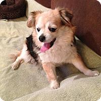 Adopt A Pet :: ANNABELLE - Higley, AZ