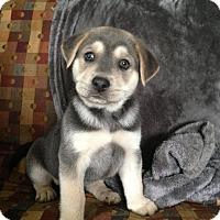 Adopt A Pet :: Beans - Albany, NY
