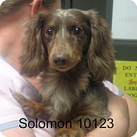 Adopt A Pet :: Solomon - baltimore, MD