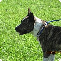 Adopt A Pet :: Josie - Buffalo, WY
