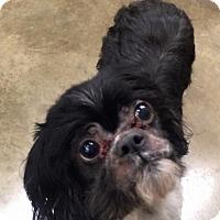 Adopt A Pet :: Olaf - Oak Ridge, NJ