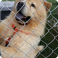 Adopt A Pet :: LANCELOT - Dix Hills, NY