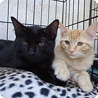 Adopt A Pet :: Misha and Boswell - Berkeley, CA