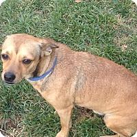 Adopt A Pet :: Chuck - Lodi, CA