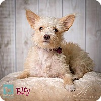 Adopt A Pet :: Elfy - Carlsbad, CA
