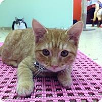 Adopt A Pet :: Lady Paw Paw - Savannah, GA