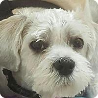 Adopt A Pet :: Andi - Worcester, MA