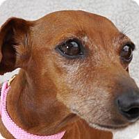 Adopt A Pet :: Mulan Sommer - Houston, TX