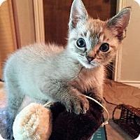 Adopt A Pet :: Diablo - Hurst, TX