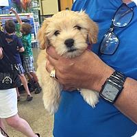 Adopt A Pet :: Gina - Brea, CA