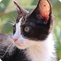 Adopt A Pet :: Minnie -- 50.00 - cupertino, CA