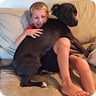 Adopt A Pet :: Brotus