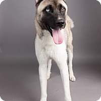 Adopt A Pet :: Jordan - Columbia, SC
