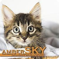 Adopt A Pet :: Plato - St. Louis, MO