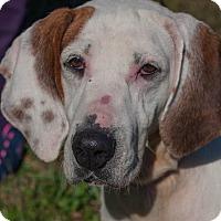 Adopt A Pet :: Karen - Buffalo, NY