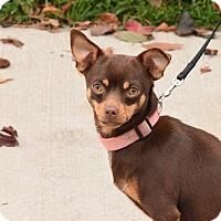 Adopt A Pet :: Cher - Meridian, ID